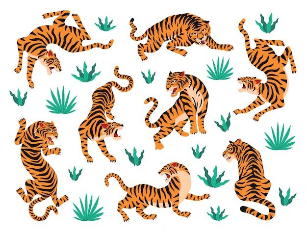 Conjunto de vetores de tigres e folhas tropicais.