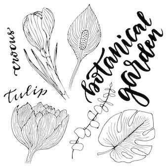 Conjunto de vetores florestais. ilustração desenhada mão do vetor com folhas e flores. conjunto de jardim botânico de vetores