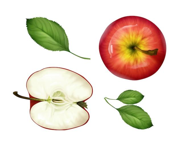 Conjunto de vista superior de apple realista. o fruto 3d maduro cortou as folhas da metade, as inteiras e as verdes.