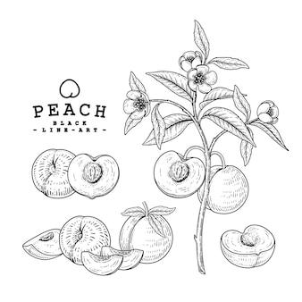 Conjunto decorativo de ilustração desenhada à mão fruta pêssego.