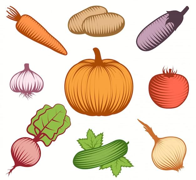 Conjunto decorativo de legumes coloridos