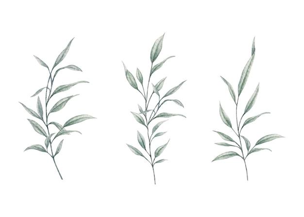 Conjunto decorativo de ramos de folhas verdes