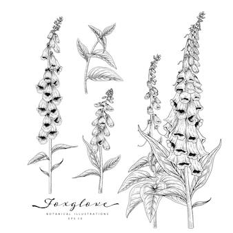 Conjunto decorativo floral de esboço. desenhos de flores de dedaleira