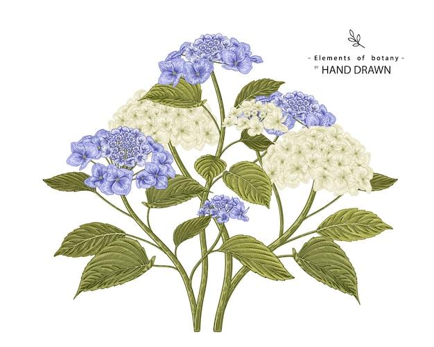 Conjunto decorativo floral de esboço. desenhos de flores de hortênsia branca e azul.
