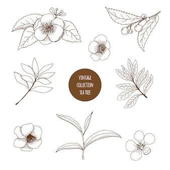 Conjunto desenhado à mão de ervas cosméticas