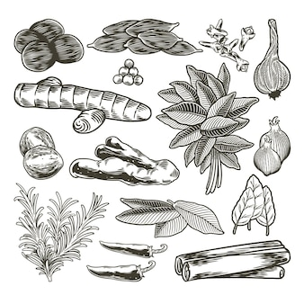 Conjunto desenhado à mão de especiarias e ervas