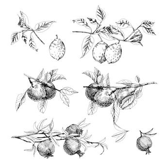 Conjunto desenhado à mão de frutas de esboço