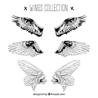 Conjunto desenhado à mão de três pares de alas realistas