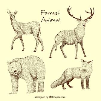 Conjunto desenhado mão de animais selvagens