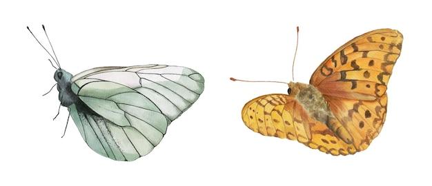 Conjunto em aquarela de borboletas brancas e amarelas