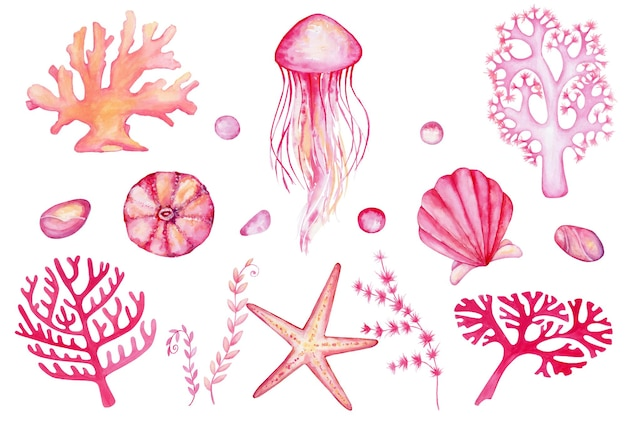 Conjunto em aquarela de elementos do mundo subaquático. corais desenhados à mão, medusas, rochas, estrelas do mar, conchas do mar, sobre um fundo isolado. Vetor Premium