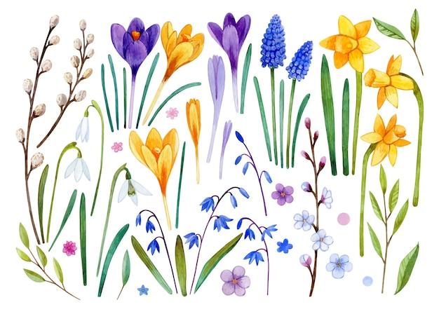 Conjunto em aquarela de flores da primavera, jacintos, açafrões, flocos de neve, narcisos, salgueiro