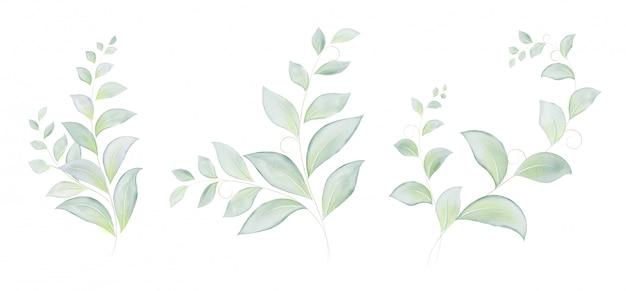 Conjunto em aquarela de folhas verdes