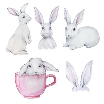 Conjunto em aquarela de giros coelhinhos da páscoa cinza e brancos, isolado no fundo branco.
