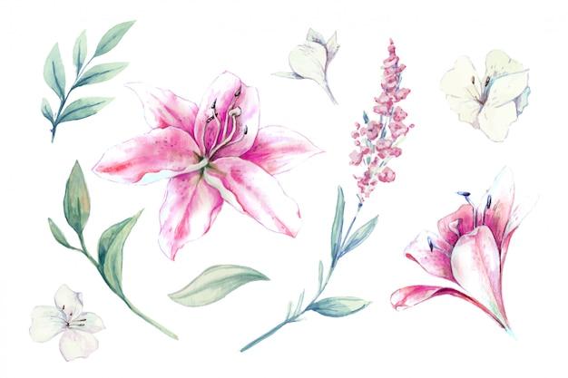 Conjunto em aquarela de lírios, brotos e folhas