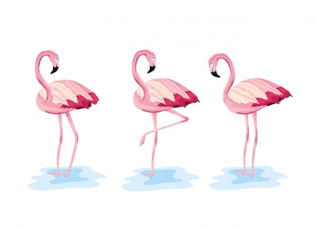 Conjunto flamingos tropical animal selvagem