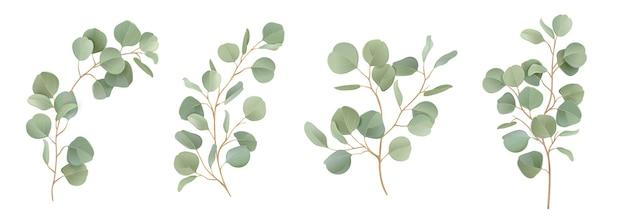 Conjunto floral aquarela de vetor de eucalipto. ramos de folhas verdes, folhagens de dólar de prata, elementos tropicais de folhas naturais para convite de casamento, papel de carta, saudações, papéis de parede, moda, plano de fundo