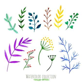 Conjunto floral de vetores. coleção floral colorida com folhas e galhos, pintura aquarela