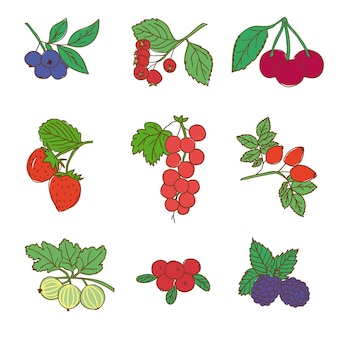Conjunto gráfico colorido de alimentos naturais