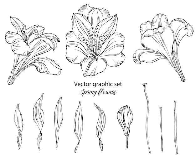 Conjunto gráfico de vetor flores da primavera