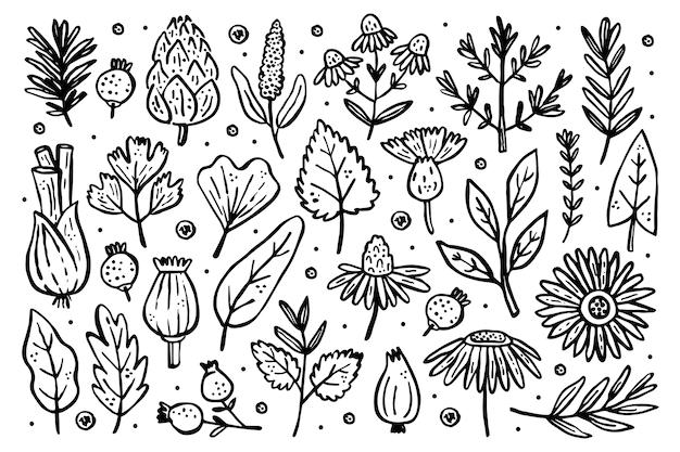 Conjunto grande de ervas. plantas florestais. flor, ramo, folha, lúpulo, cone. elementos naturais.