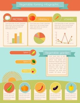 Conjunto infográfico de legumes