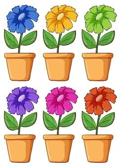 Conjunto isolado de flores em cores diferentes