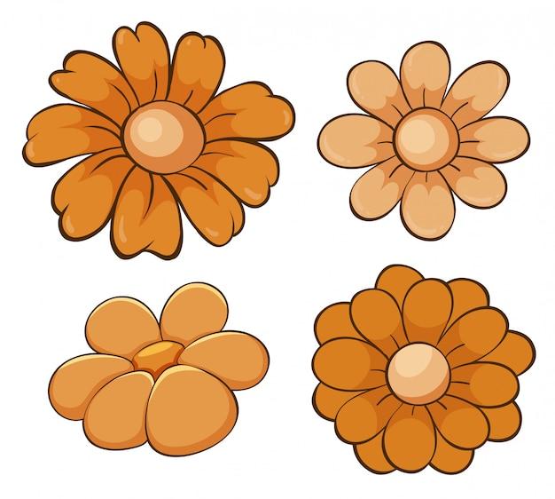 Conjunto isolado de flores em laranja