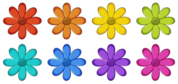 Conjunto isolado de flores