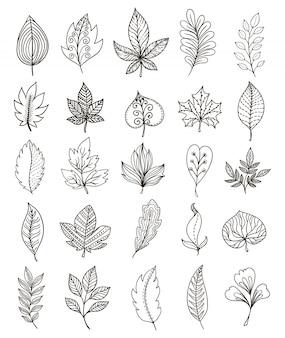 Conjunto monocromático de folhagem desenhada de mão