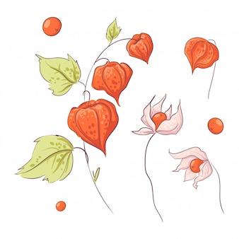 Conjunto no estilo de mão desenhando physalis de galho e flores, outono e folhas.
