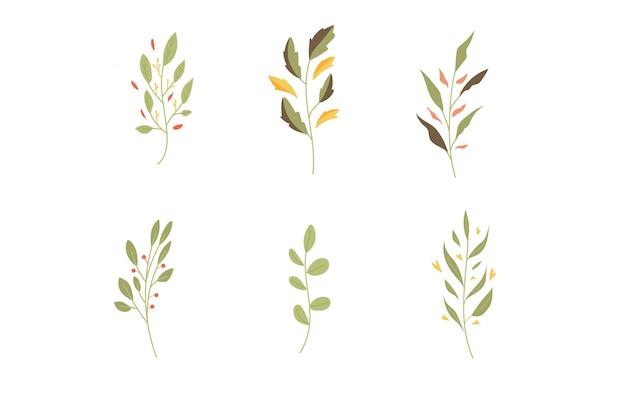 Conjunto ou coleção de ilustração botânica