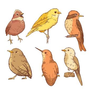 Conjunto pássaro robin desenhado à mão