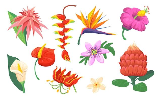 Conjunto plano de flores exóticas havaianas brilhantes