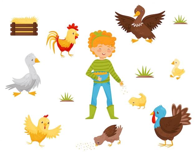 Conjunto plano de pássaros de fazenda, ninho de galinha e menina com uma tigela de grãos. aves domésticas. tema da agricultura