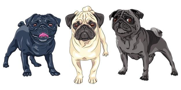 Conjunto raça de pug cachorro fofo