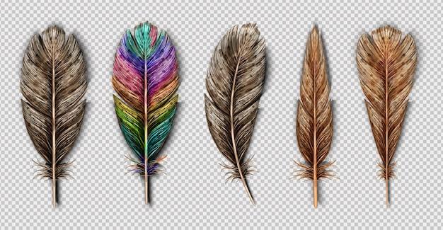 Conjunto realista com pequenas e grandes penas de pássaro multicoloridas isoladas