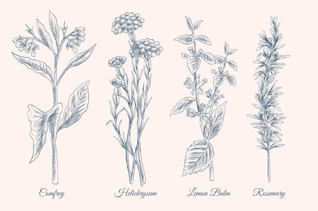 Conjunto realista de ervas com óleo essencial desenhado à mão