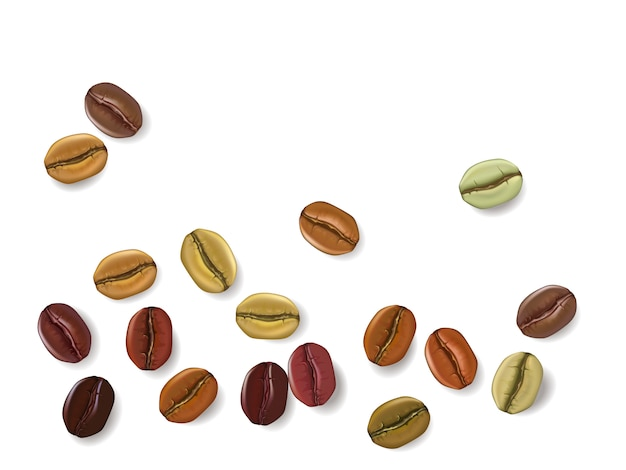 Conjunto realista de grãos de café mostrando vários estágios de torrefação, isolados na ilustração de fundo branco