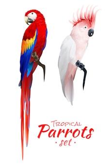 Conjunto realista de papagaios tropicais