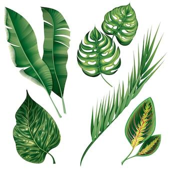 Conjunto realista de plantas de folhagem botânica tropical