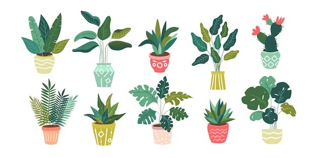 Conjunto sem emenda de diferentes ícones isolados de plantas domésticas verdes tropicais exóticas decorativas e flores em vasos coloridos.