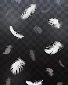 Conjunto transparente realista de penas de pássaro preto e branco isolado