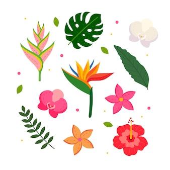 Conjunto tropical de flores e folhas