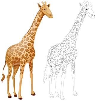 Contorno animal para girafa