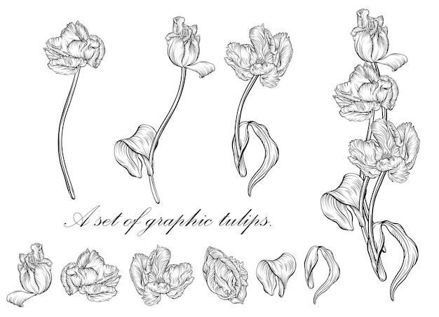 Contorno da tulipa. linha de arte flores desenhadas à mão. vetor de tulipas. ilustração floral