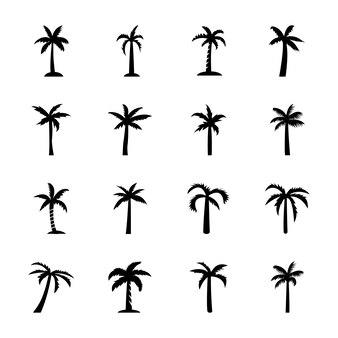Contorno de árvore de faia