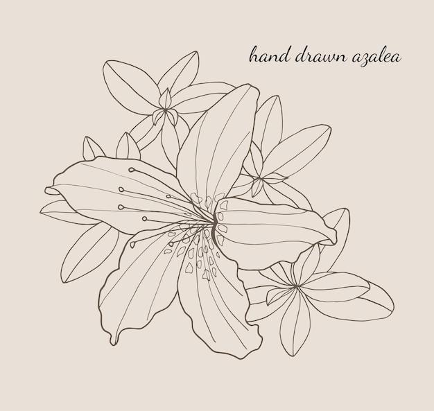 Contorno de desenho de flor de azaléia