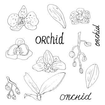 Contorno preto de uma orquídea em um fundo branco conjunto de livros de colorir para crianças e adultos