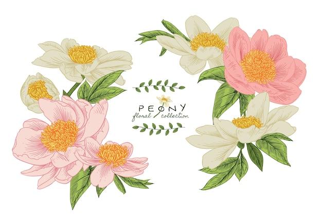 Convite. desenhos de flores de peônia